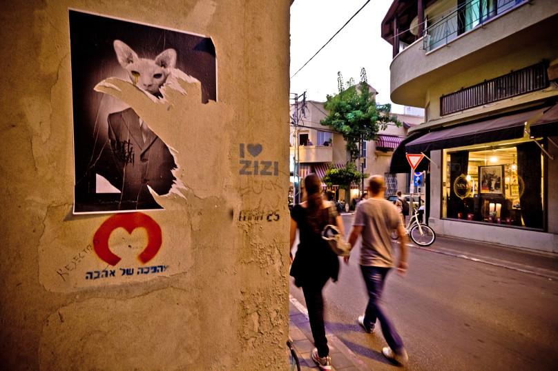 5_SA_Cat_Zizi
