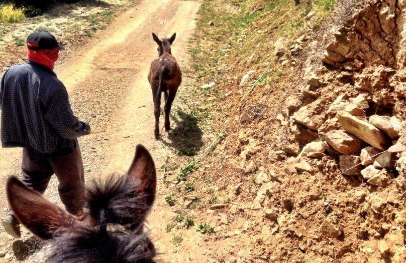 8_Berber_Donkey