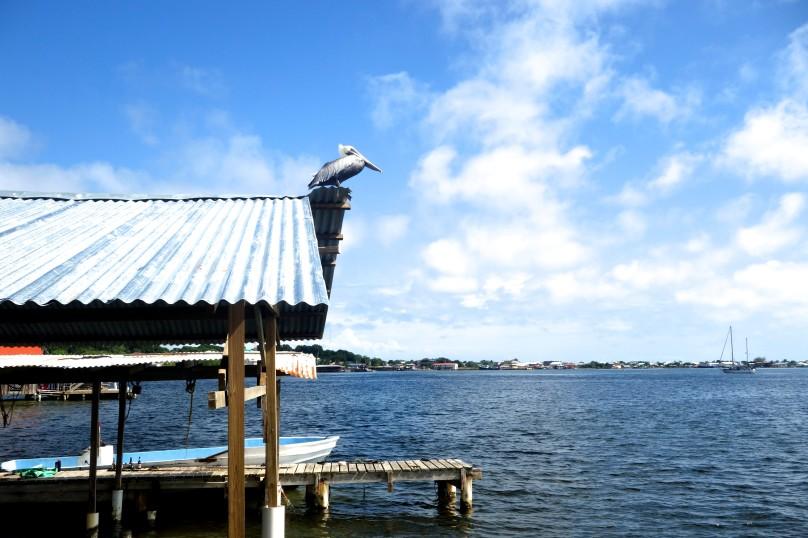 0.Bird_Sea