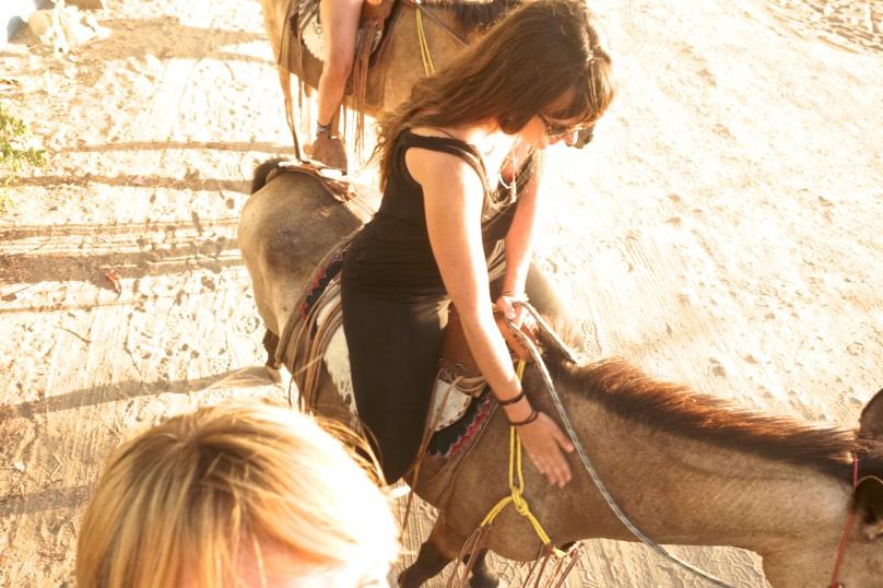 0.Horses