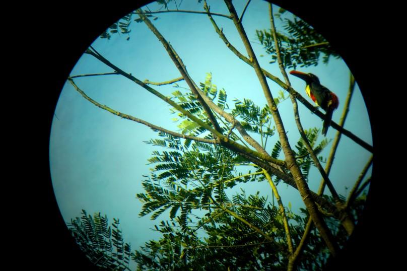0.Bird