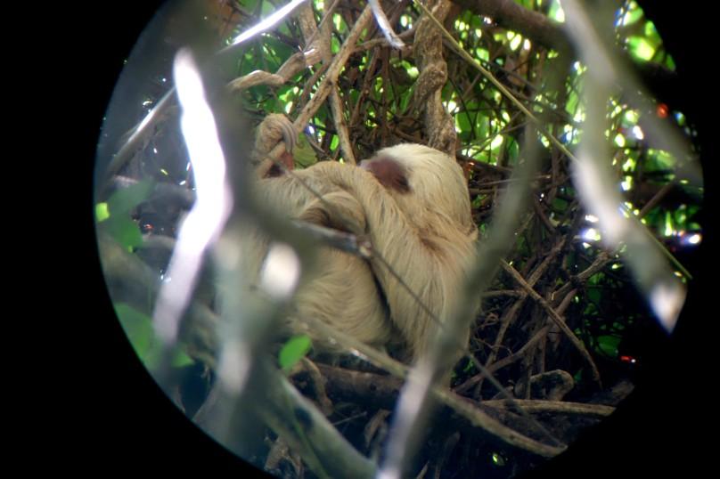 0.Sloth_Telescope