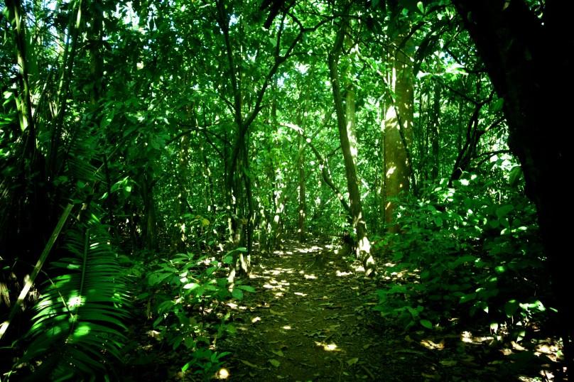 0.Way_Jungle